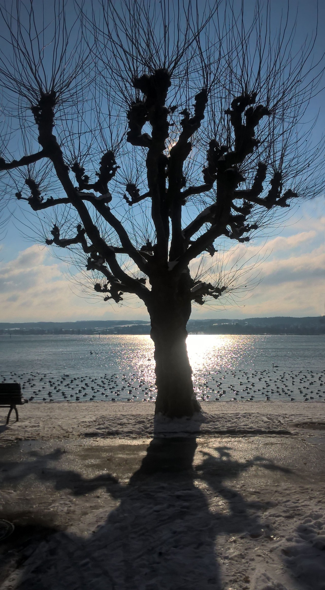 Wintertree on the lake
